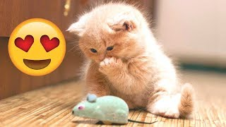 OMG! - Cute and Funny Cat Compilation 2020 #2