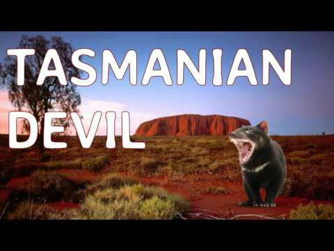 Learn Real Native Australian Animal Sounds with Surprise Time, Real Animal Sound Effects