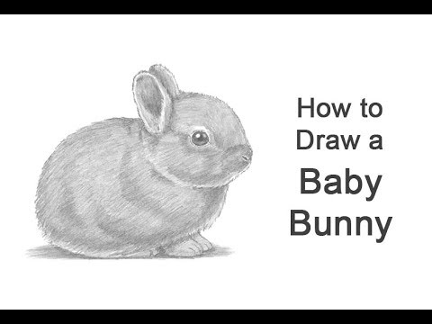 How To Draw A Rabbit (Baby) - YouTube