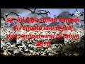Suara Panggil Burung Walet Ini Sempat Viral Di Tahun   Mp3 - Mp4 Download