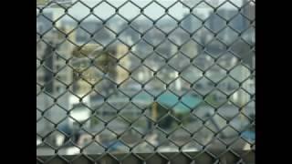 ねじねじの歌(カバー) 石川将也・佐藤雅彦作詞・栗原正巳作曲   Twisting song