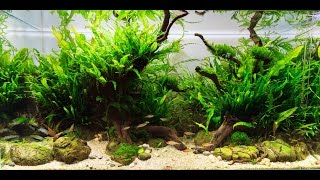 HOW TO: Care for Aquarium Plants