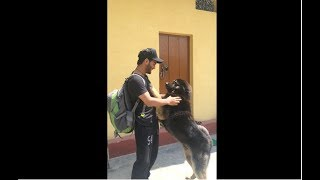 Dogs reunited with owners | pets of bittu panwar | Pets of Fan