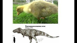 World's Fluffiest Living Dinosaur! (Fluffisaurus Giganticum)