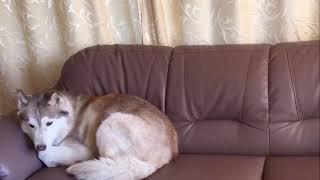 Ответ. Тест 3 Определение фантома собаки