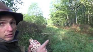 Red stag hunting / Polowanie na byki