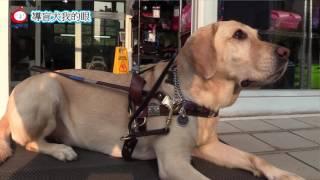Publication Date: 2017-03-29 | Video Title: 「導盲犬-我的眼」微電影創作比賽(浸信會沙田圍呂明才小學 參