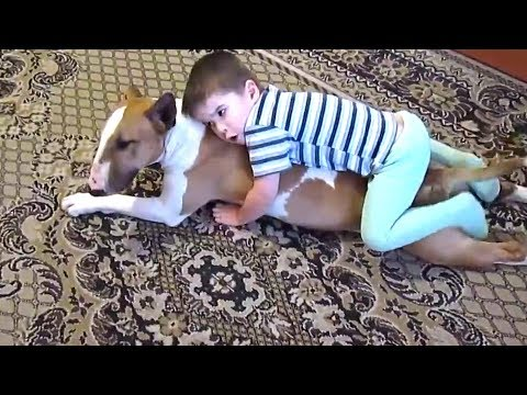 Bull Terrier and Baby Sweet Sweet Kisses - Funny Dogs Compilation 2018