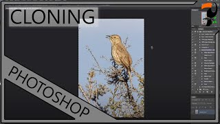 Nature Photography Workshop - Post Processing and Cloning