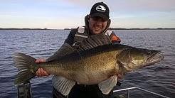 Kuha 10 kg - 97cm - Mikadon Fishunter jigillä - Jättikuha - Kuhankalastus - Kuhanjigaus - Kalastus