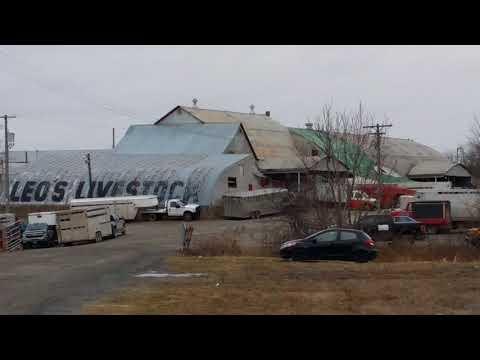 Ottawa Livestock Exchange