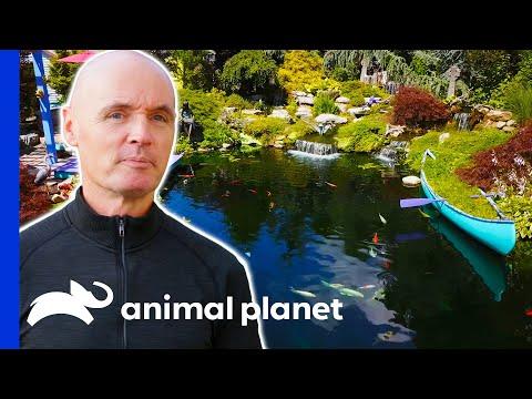 Man Builds An Impressive Pond For His Koi Fish   Animal Cribs