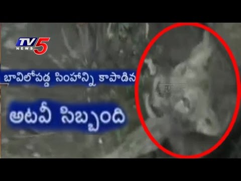 Lioness Rescued From a Well by Forest Officials in Gujarat | TV5 News