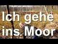 Natur Expedition ins Hochmoor - Imker Nordbiene geht ins Moor - Abenteuer Naturerkundung