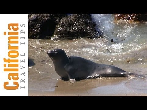Elephant Seals - Hearst Castle