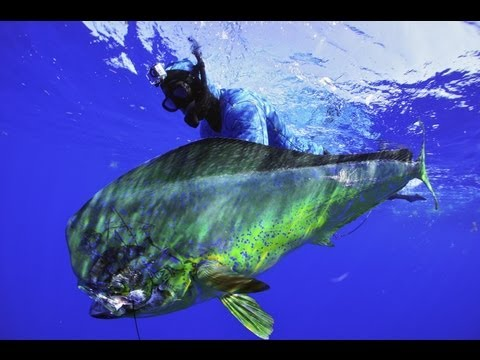 Spearfishing With Cameron Kirkconnell- Riffe Pole Spear How To