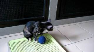 My Kitten Is Talking To The Ball?
