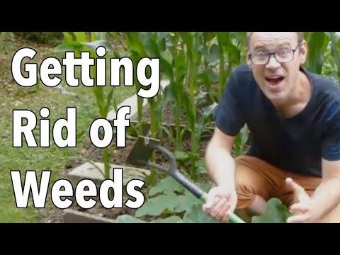 pests in the garden