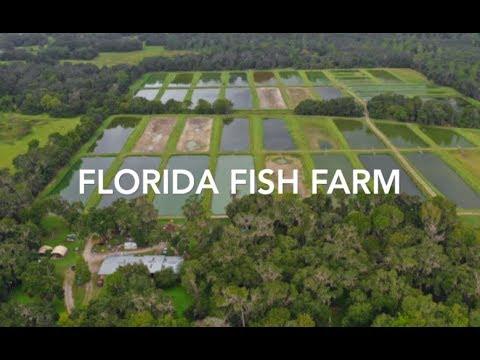 Florida Fish Farm For Sale     75 Acres   FLAVIP.com