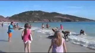 Popular Videos - Fish & Shark