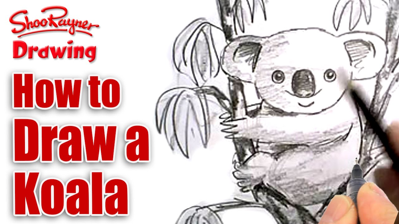 Uncategorized Draw Koala how to draw a koala youtube