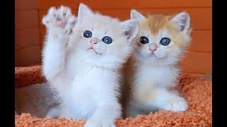 Кто тут самый красивый Подборка смешных котов и котят для хорошего настроения