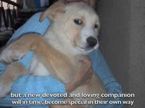 Loss Of Pet >> Saying Goodbye - Loss of a pet - YouTube