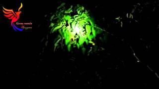 Download Video Cathcing bird at night (menangkap Burung saat Malam) MP3 3GP MP4