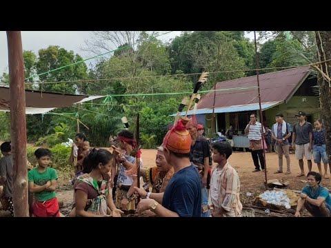 Ritual Nyorat ,liau Bapa Markus Pulen, Suku Dayak Katingan Kalimantan Tengah Desa Mirah Kalanaman