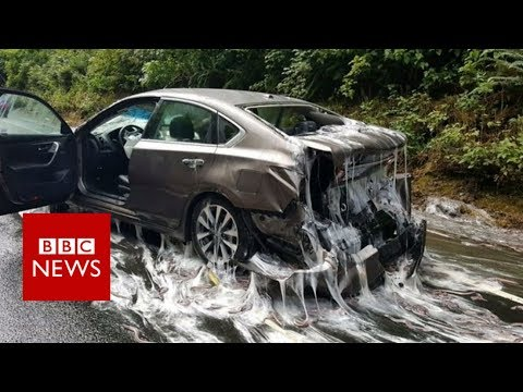 Eel slime cascades over US road - BBC News