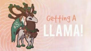Animal Jam: LLAMAS LLAMAS LLAMAS