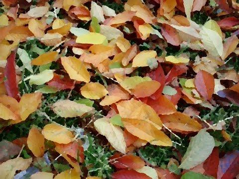 Картинки из сухих листьев своими руками