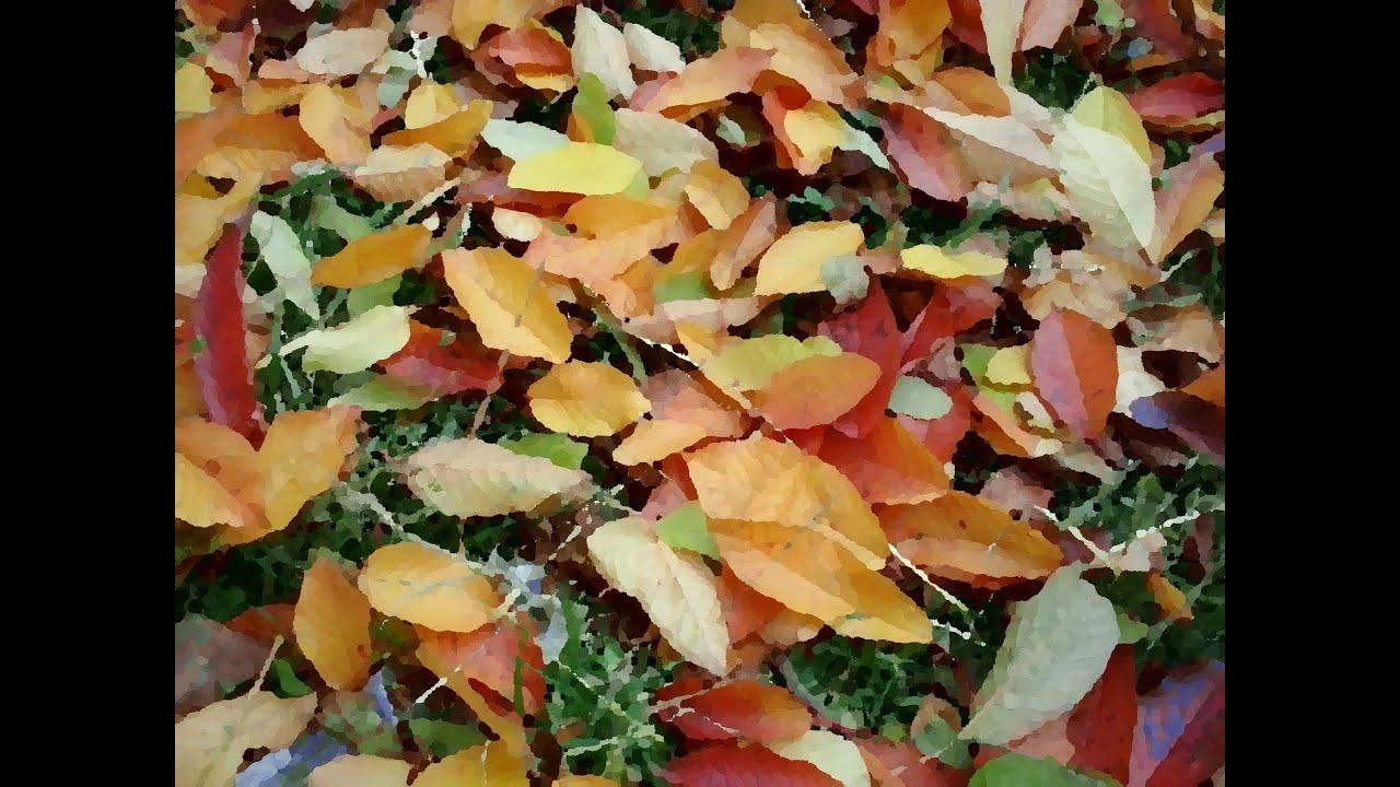Машинки из листьев своими руками фото 234