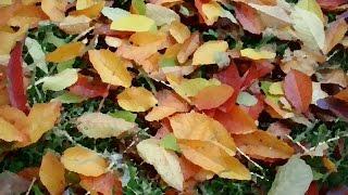 Поделки из листьев. Дизайнерские открытки из листьев своими руками! Video