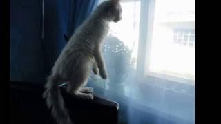 котенок ходит на задних лапках