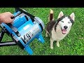 -K-9 III- Best Husky Coat Deshedder! - H