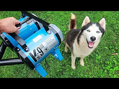 'K-9 III' Best Husky Coat Deshedder! - Husky Coat Blow Out