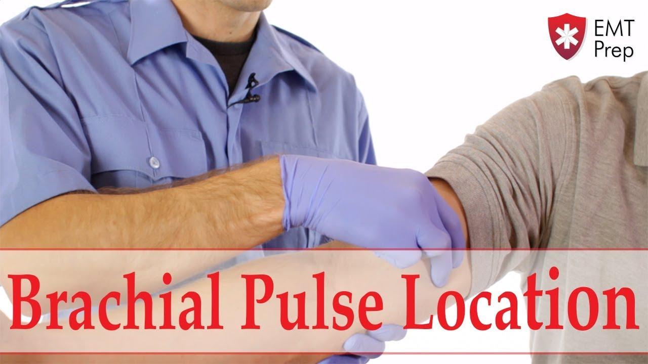 Brachial Pulse Location - EMTprep com