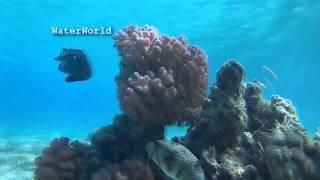 Рыба - еж / Hedgehog - fish