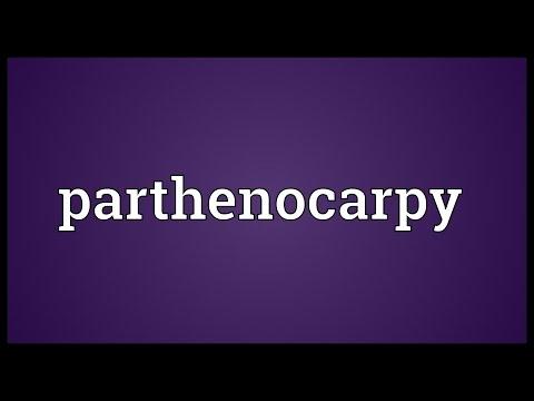 Header of parthenocarpy