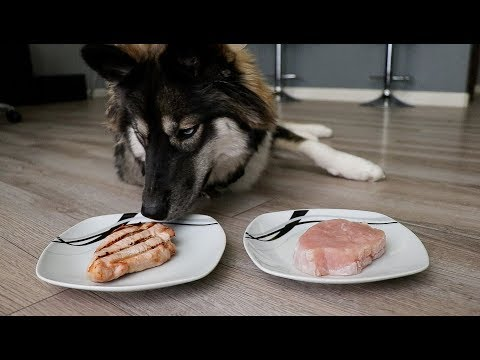 Do Dogs Prefer Cooked or Raw Turkey?