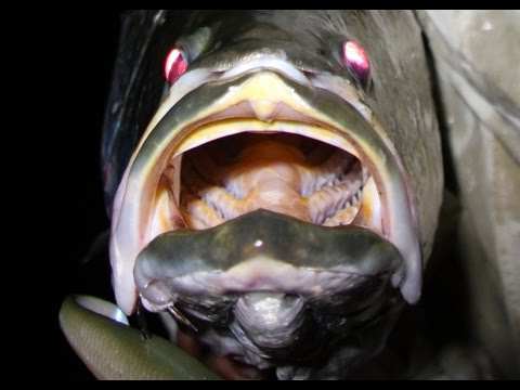 How To Catch BIG Barramundi - Record Bohle River Barra