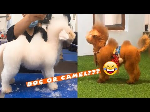 Try Not To Laugh Dec 2018 | Funny Pet Compilation | Funny Animals Videos