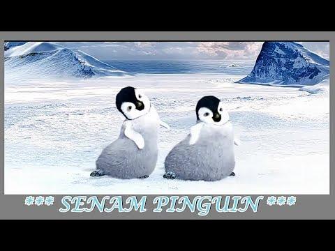 Senam Pinguin Asli - Versi Dua Pinguin Lucu Senam Sehat Gembira Bersama
