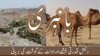 Camel Biryani | Bambri Uthal | Lasbela | Balochistan | Pakistan | Vlog # 32 |