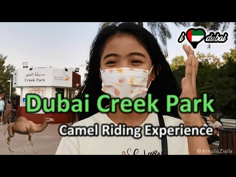 Camel Riding Experience at Dubai Creek Park