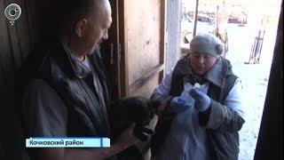 В трёх районах Новосибирской области идёт тотальная вакцинация животных от бешенства