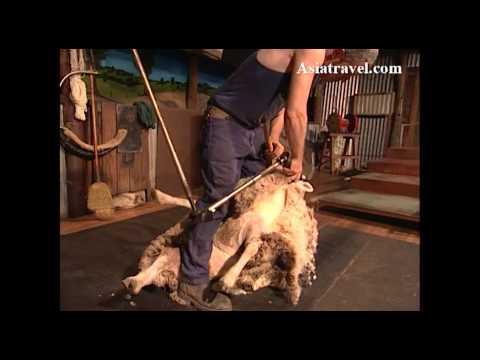 Sheep Shearing, Australia by Asiatravel.com