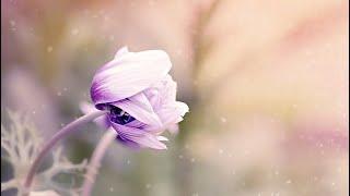 Ey ALLAHim beni senden ayırma | Müziksiz Ilahi 2017