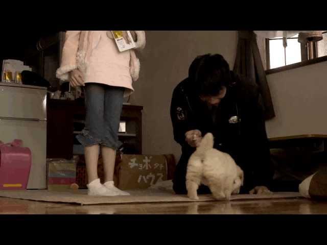 映画『犬のおまわりさん てのひらワンコ3D』予告編